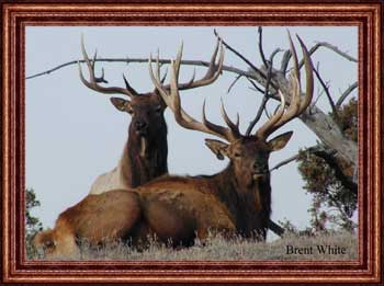 why use colorado elk outfitter