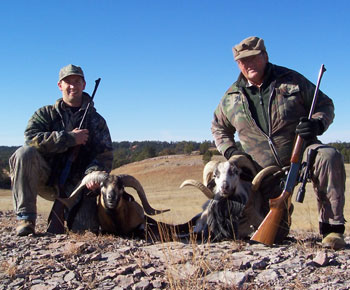sheep hunting, dall sheep hunting, sheep hunts, sheep hunting